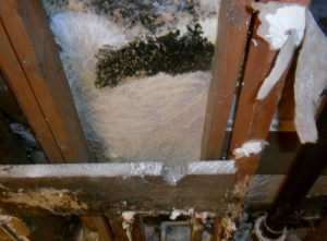 That isn't a sweater, that's actually #moldbuildup inside a wall cavity.