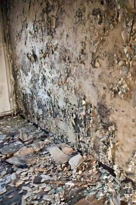 interiors of a neglected house in really bad condition filled with mold and devastation