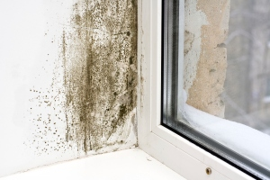 The damp is attacking the wall at a window