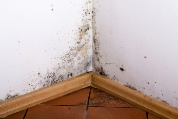 Mold on Wood.jpg